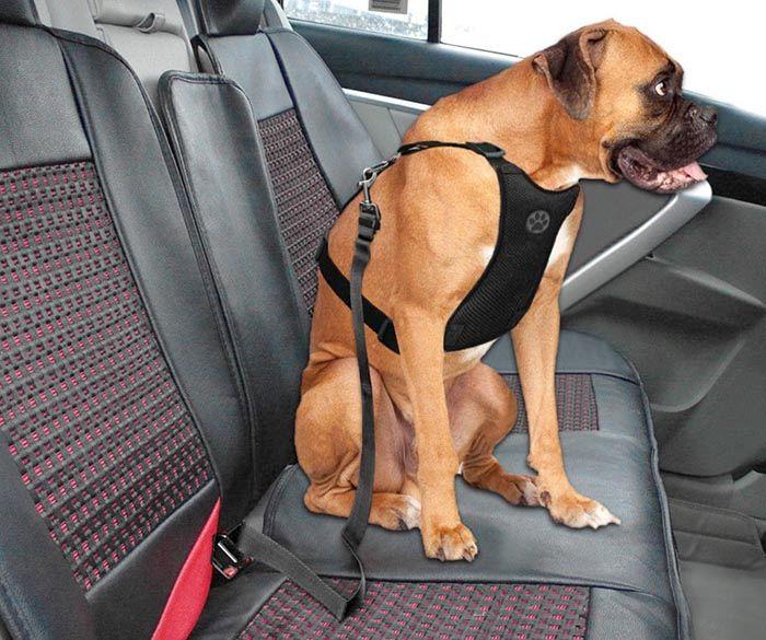 Arnés perros coche