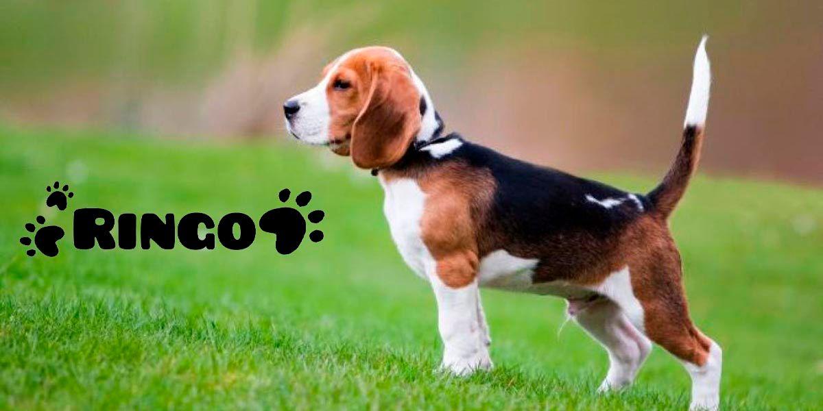 Como encontrar un nombre bonito para tu perro