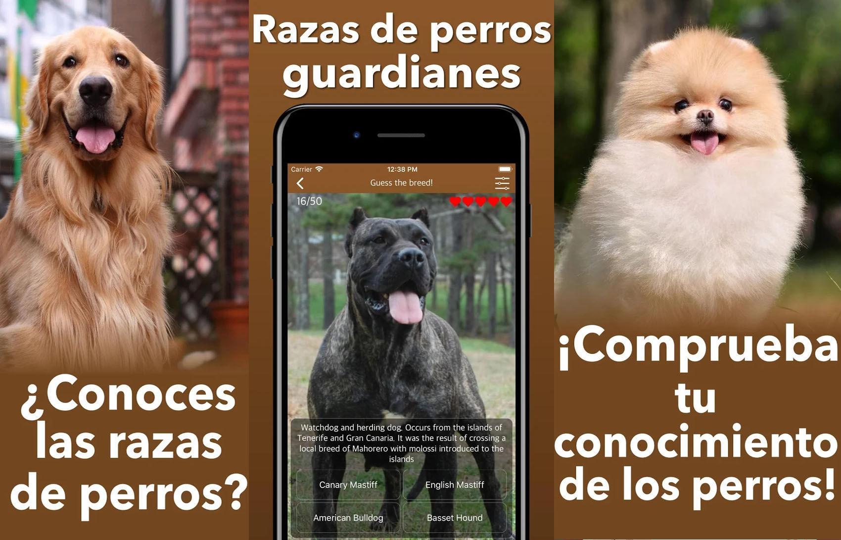 Con este juego podrás mejorar tus habilidades de reconocimiento canino sin tener que escanear su foto