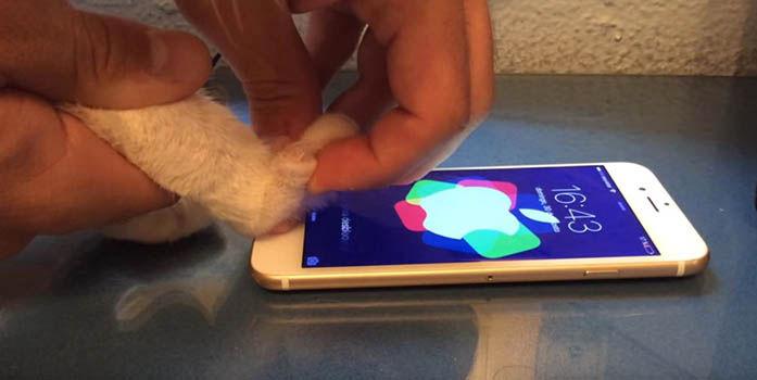 Desbloquear iPhone con huella de gato