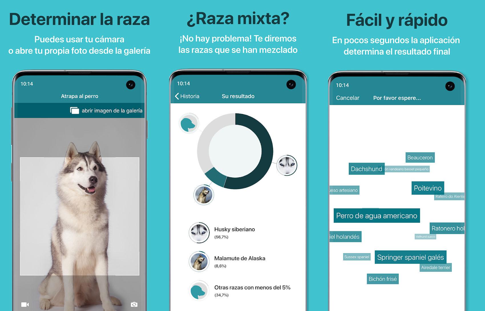 Dog Scanner es un identificador de razas de perros que te permite escanear fotos de humanos para ver a qué perro te pareces