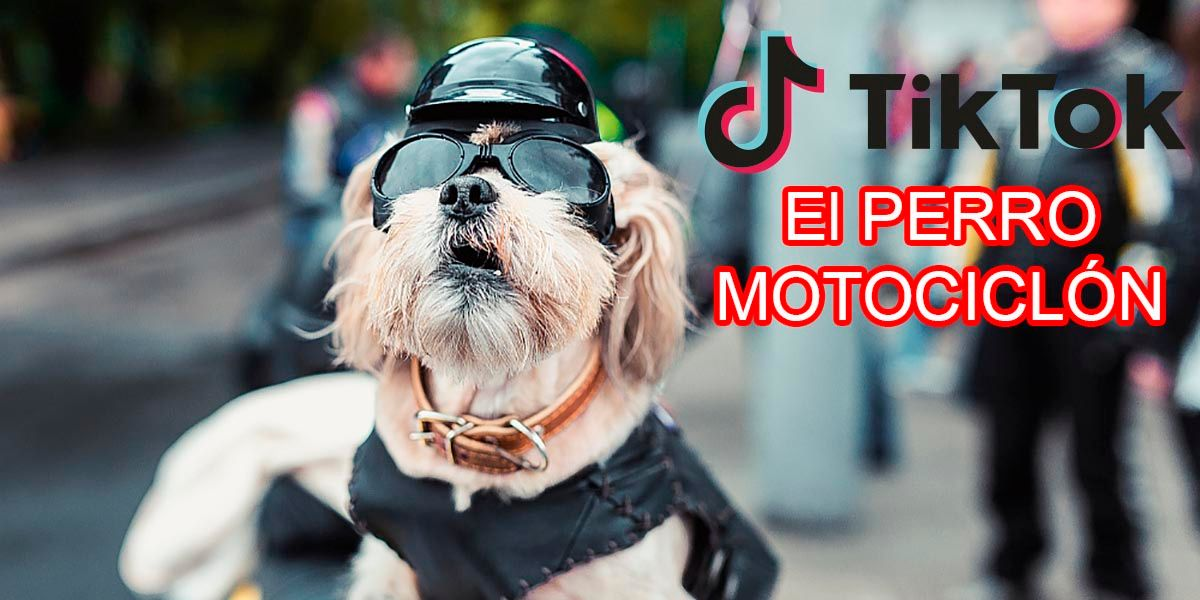 El perro motociclon TikTok viral