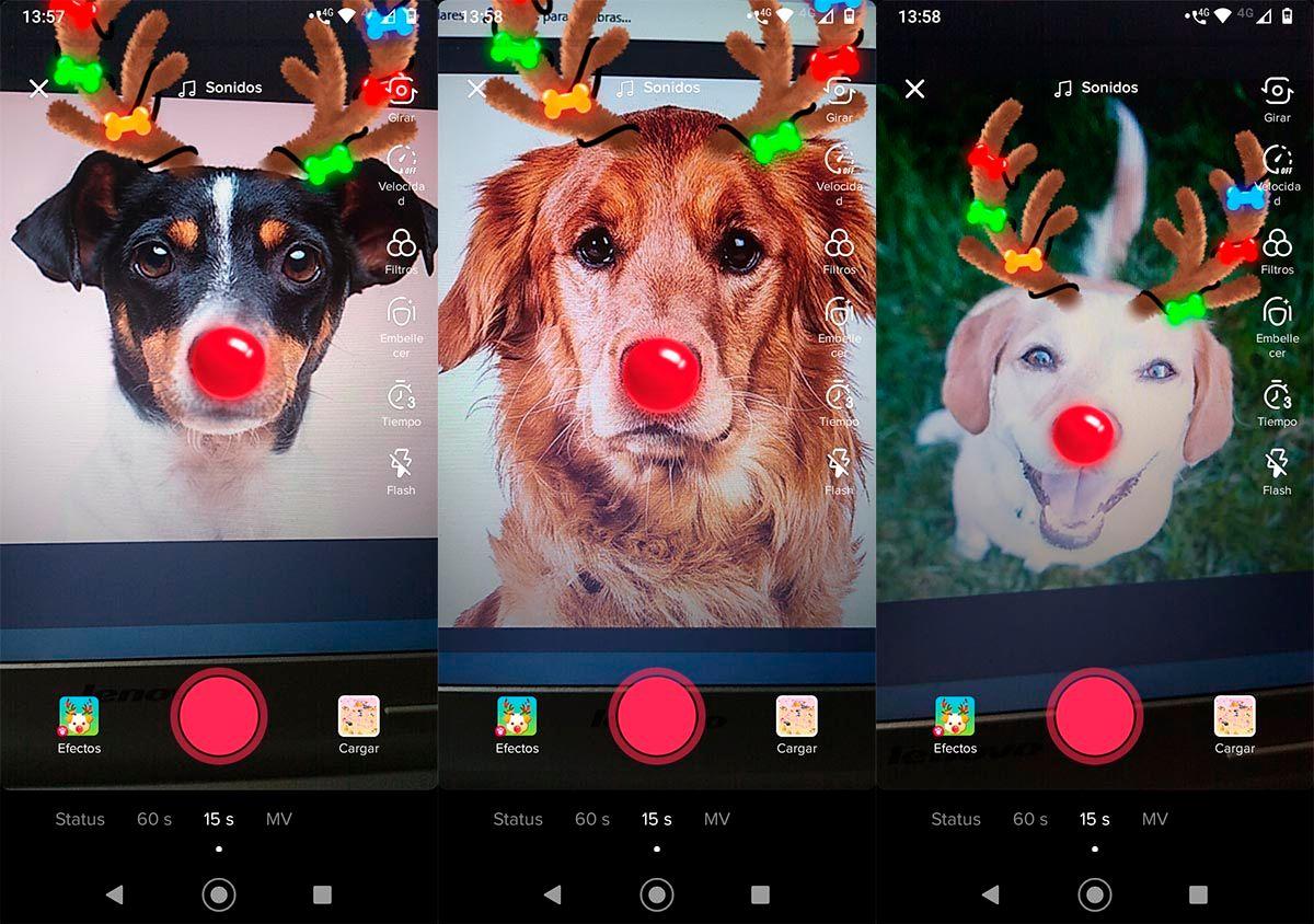 Filtro navidad para perros TikTok