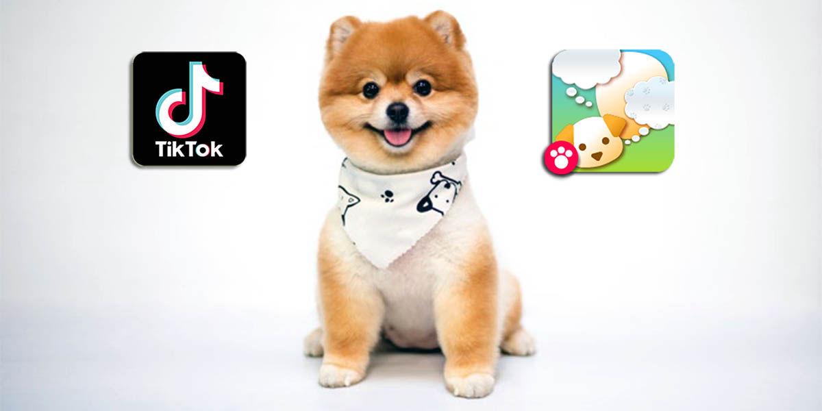 Filtro qué piensa tu perro TikTok