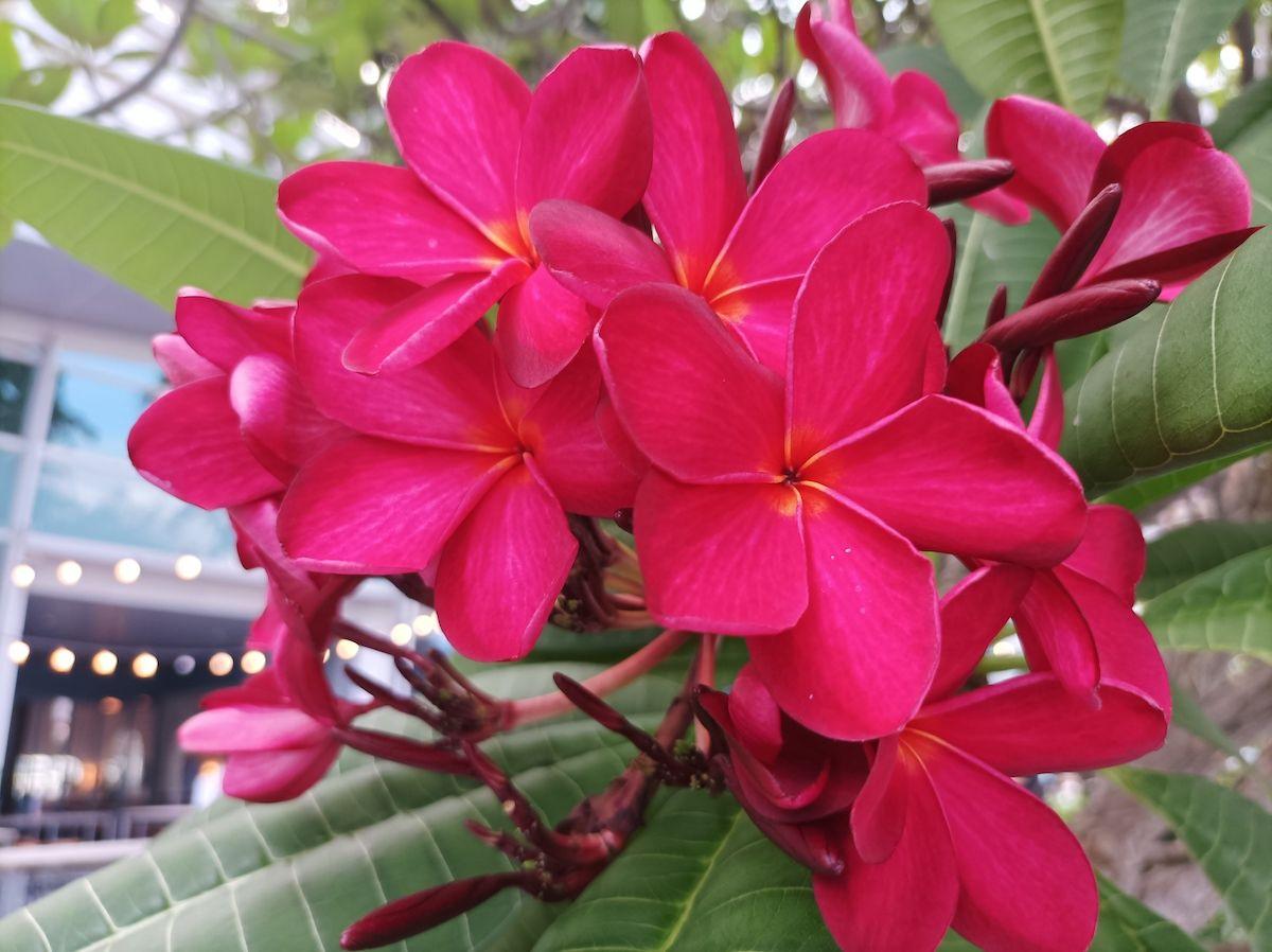 Flores Redmi Note 10 5G