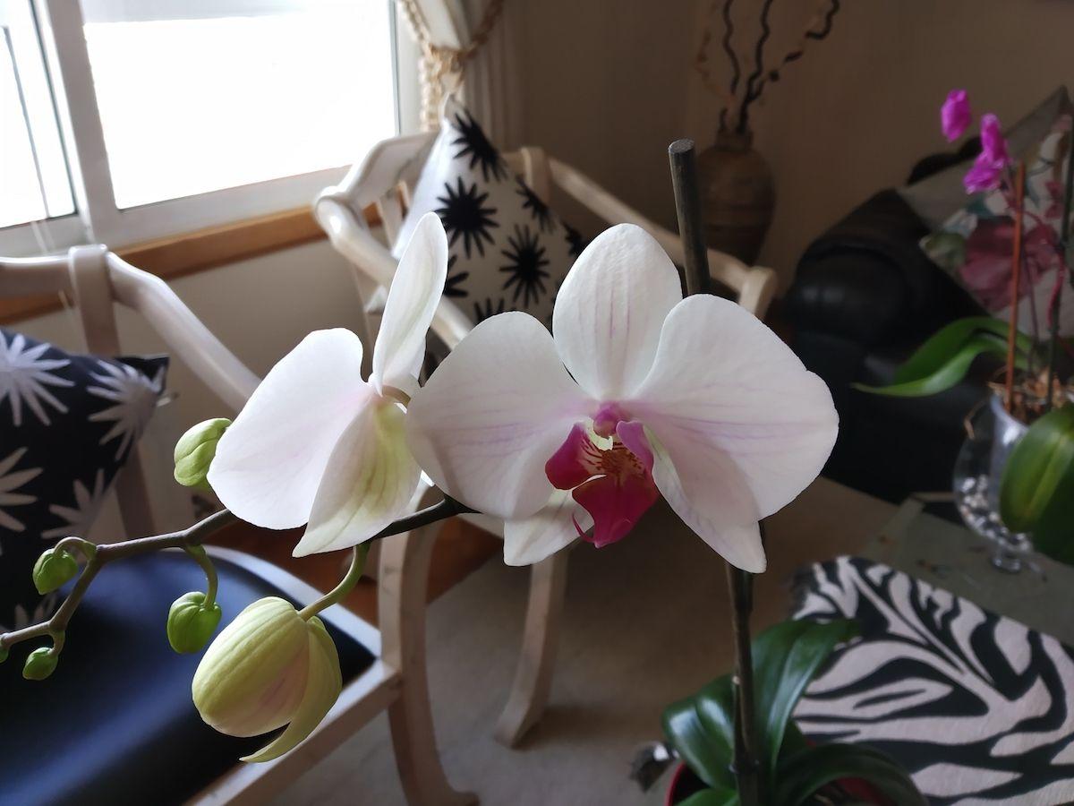 Foto flores Redmi S2