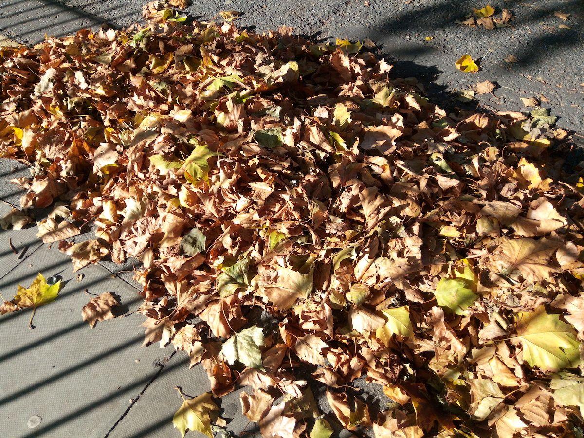 Foto hojas Oukitel K3