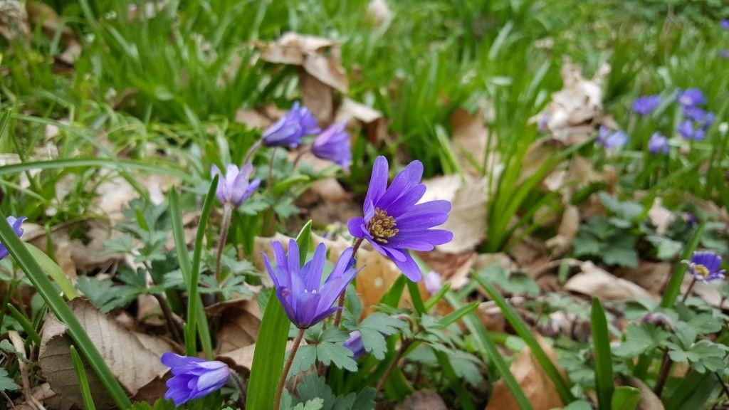 Foto violeta del Galaxy S6