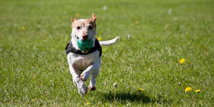 GPS Samsung perros