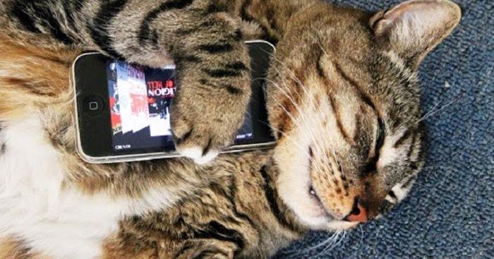 Gatos cuidados y educación android