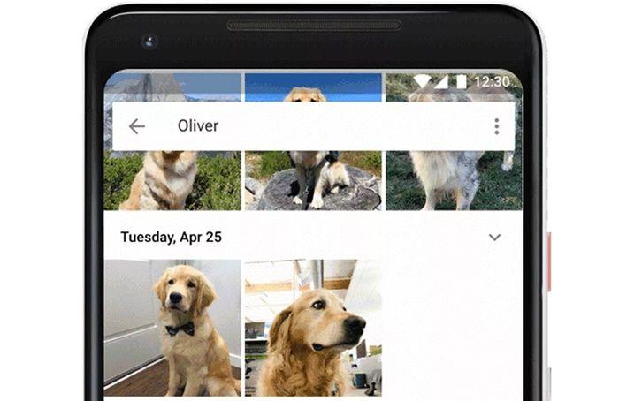 Google Fotos compartir fotos de mascotas