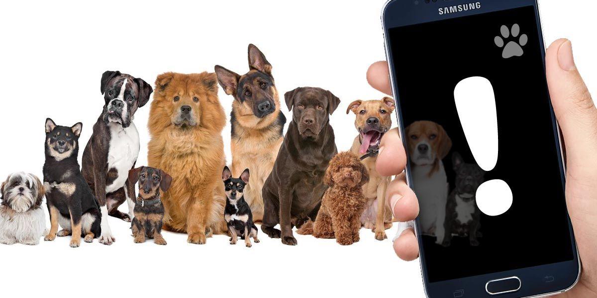 Las 10 mejores apps de Android para identificar razas de perro