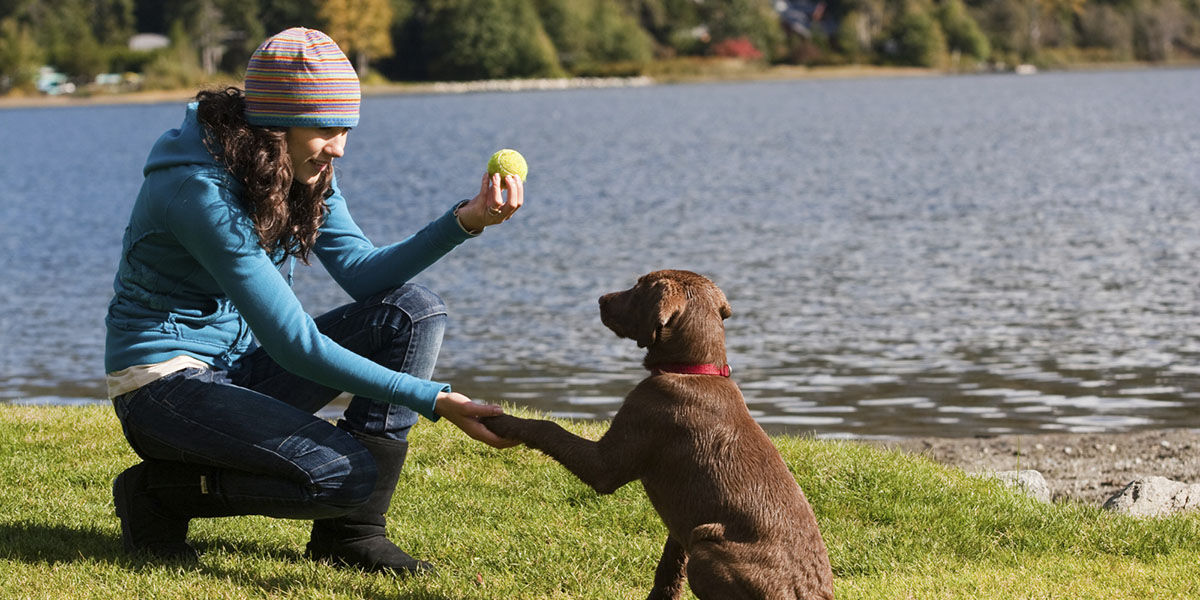 Las mejores aplicaciones para entrenar a tu perro