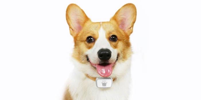 Localizador GPS Xiaomi perros