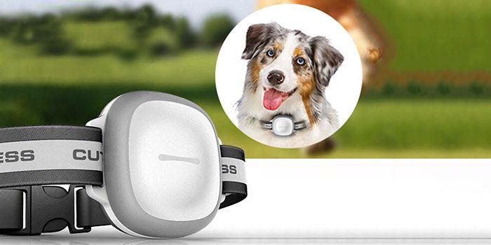 Localizador GPS perro