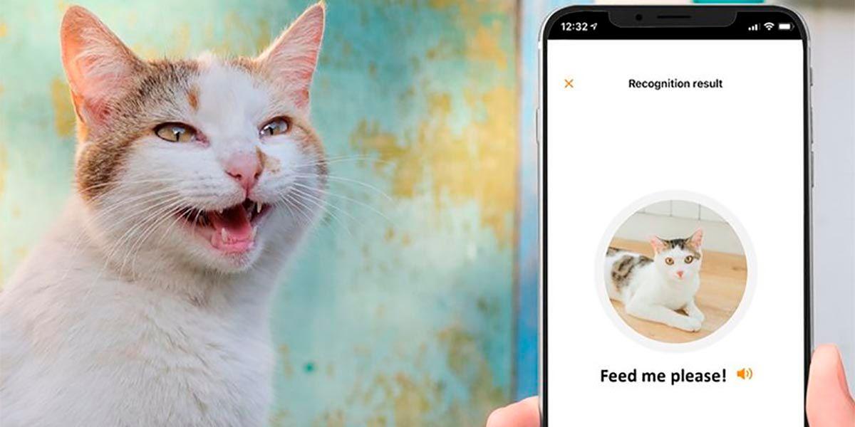 MeowTalk app para hablar con gatos