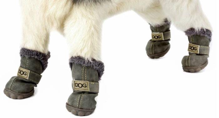 Patucos perro