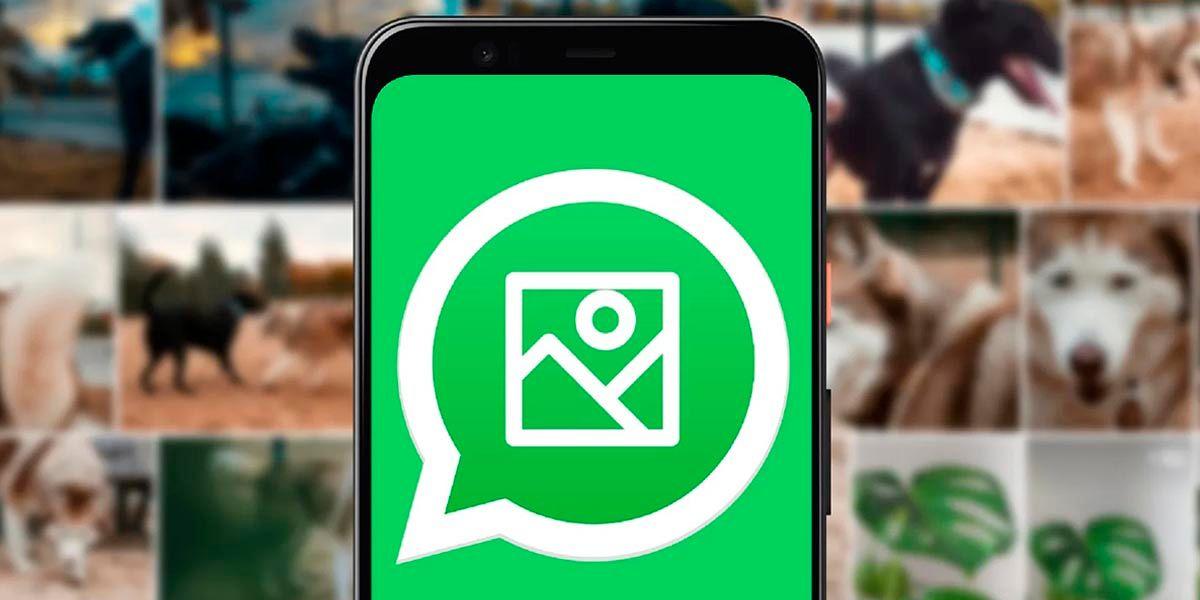 WhatsApp no guarda fotos y videos en la galeria del movil solucion
