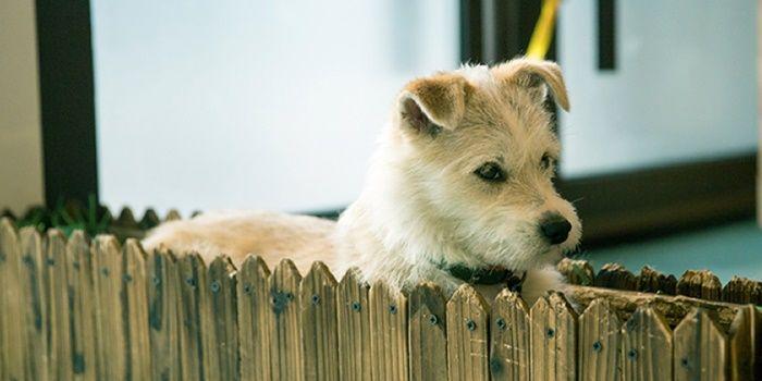 Xiaomi adopto a un perro y otras curiosidades