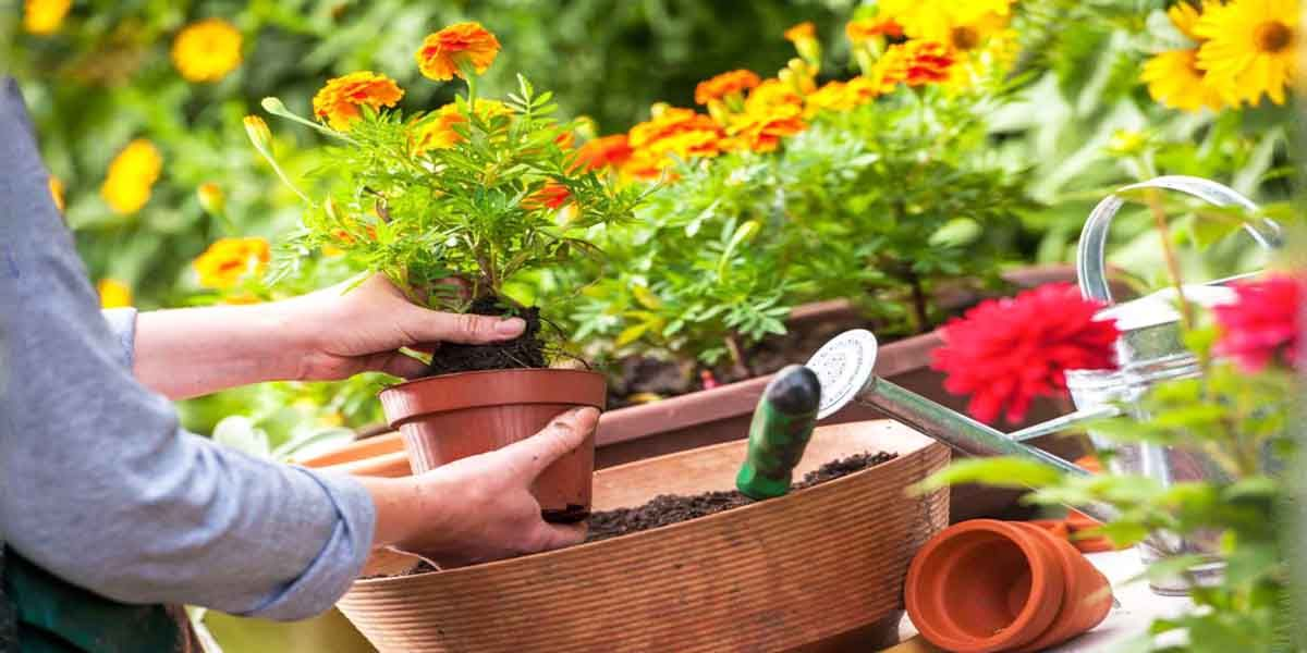 aplic cuidar plantas
