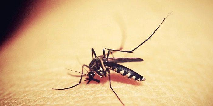 app espantar mosquitos android