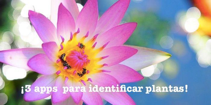 apps identificar plantas