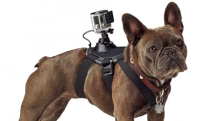 arnés GoPro perros