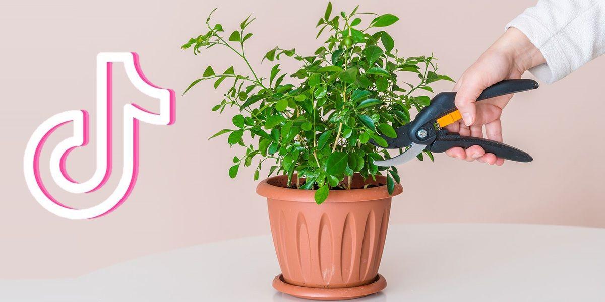 cuentas de tiktok para cuidar plantas