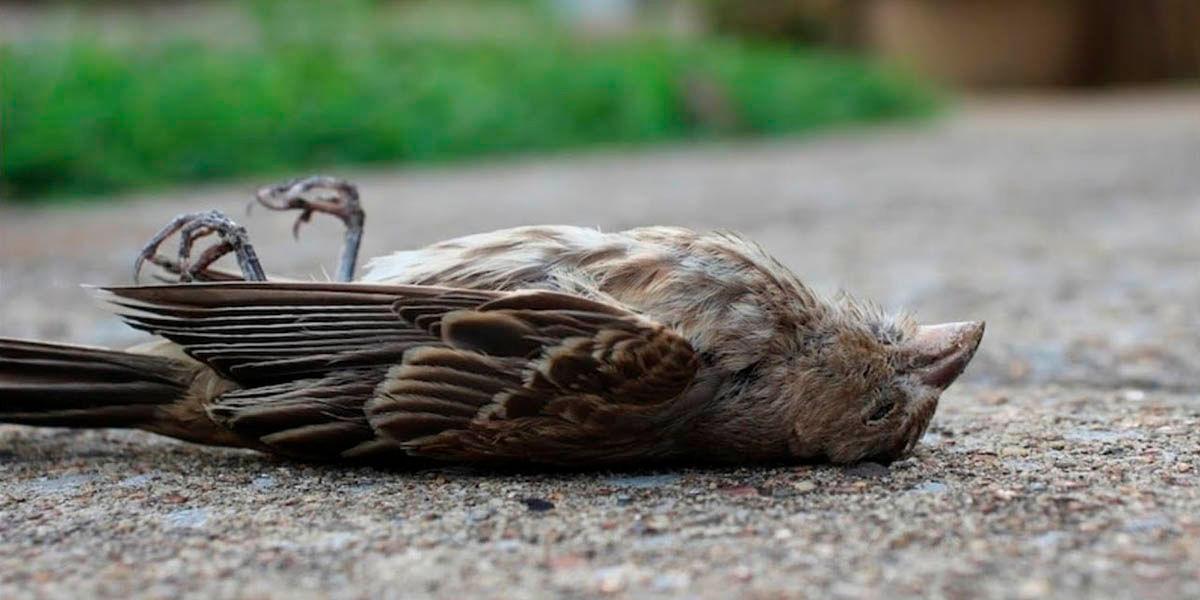 el 5g no asesina aves