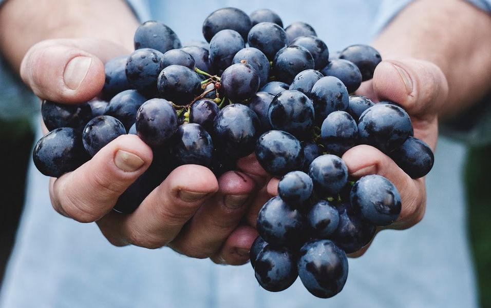 fondo-uvas