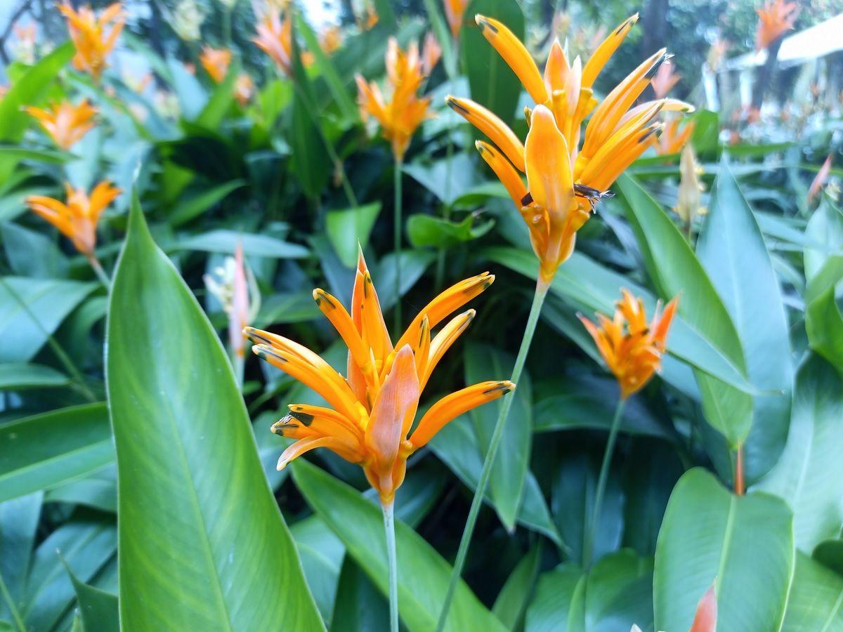 foto de dia a flores cubot x50