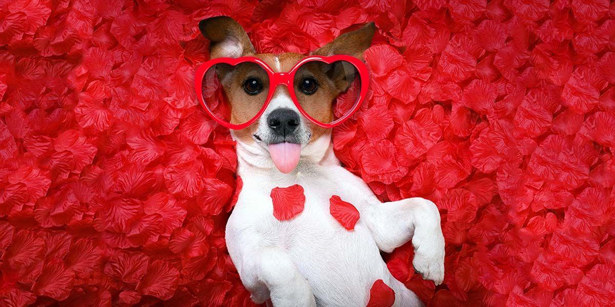 imagenes cachorros felicitaciones san valentin