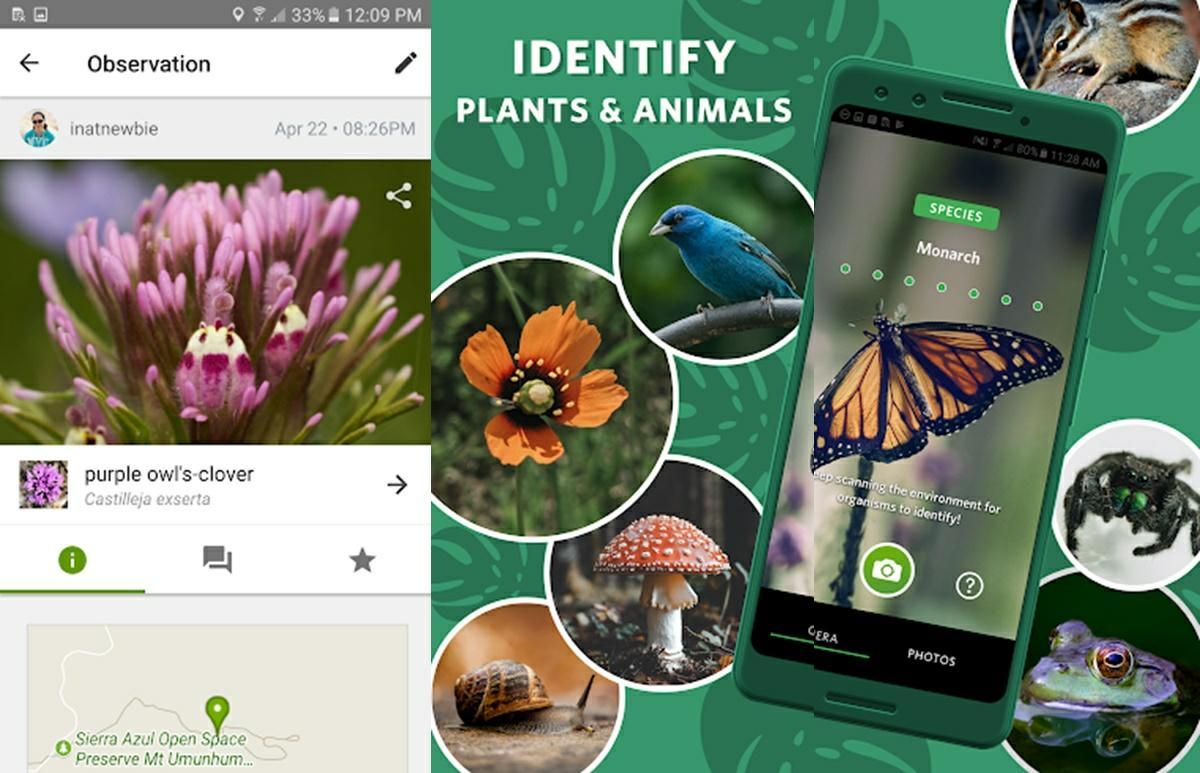 inaturalist app para identificar insectos