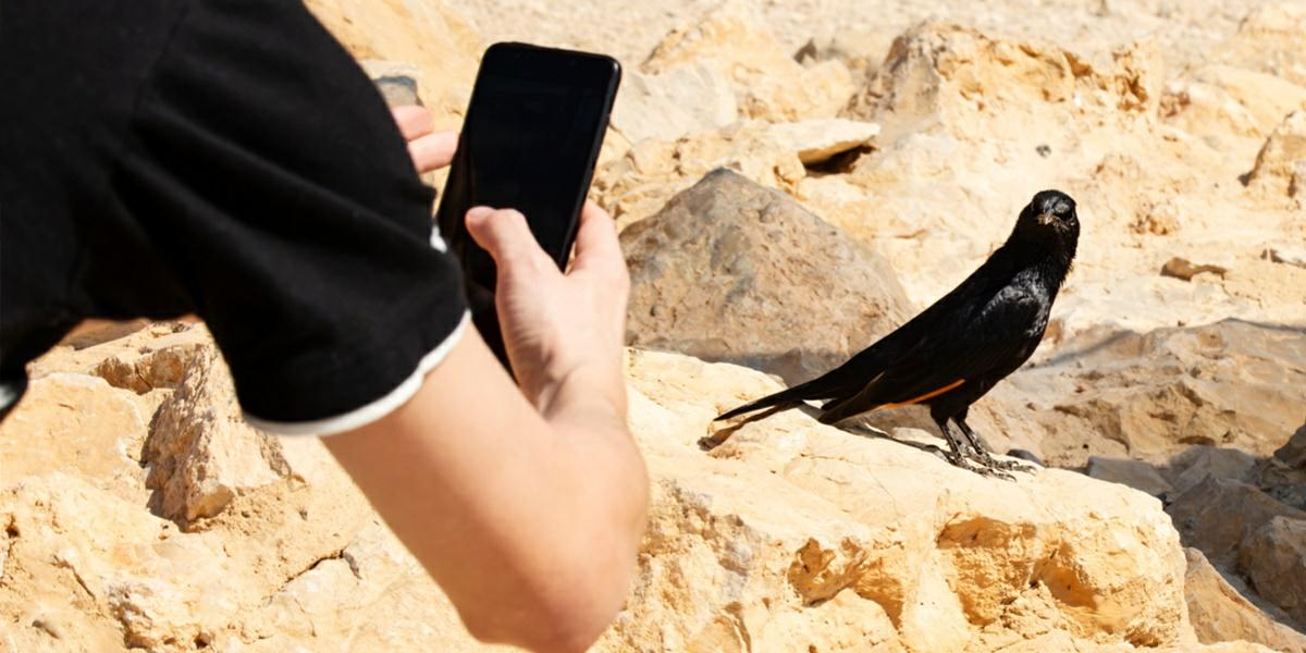 mejores apps identificar pajaros aves
