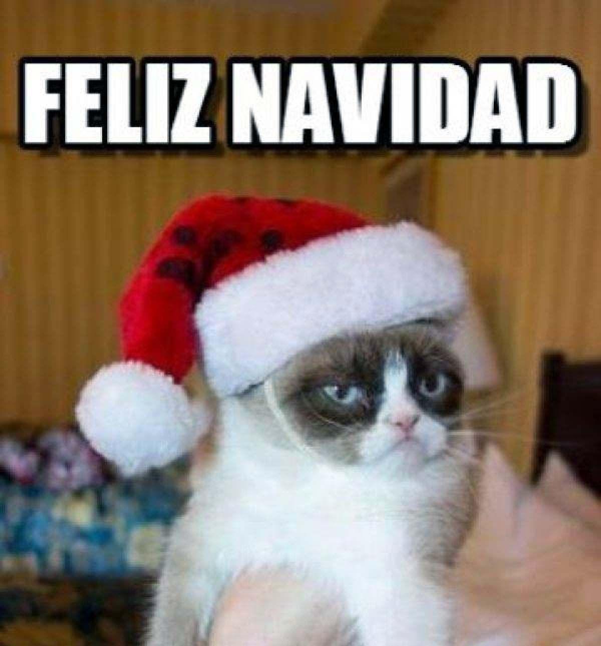 meme navidad 2020 nochebuena gatos