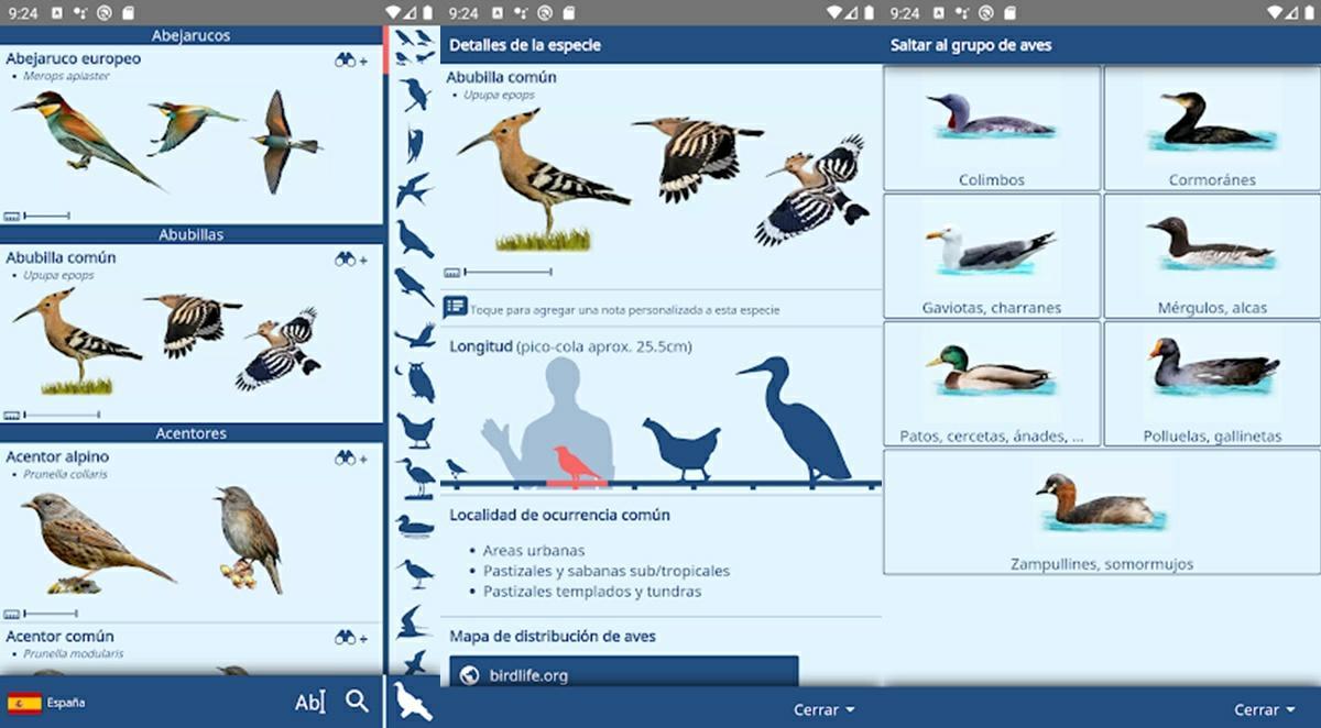 ornito app
