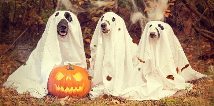 perros fantasma
