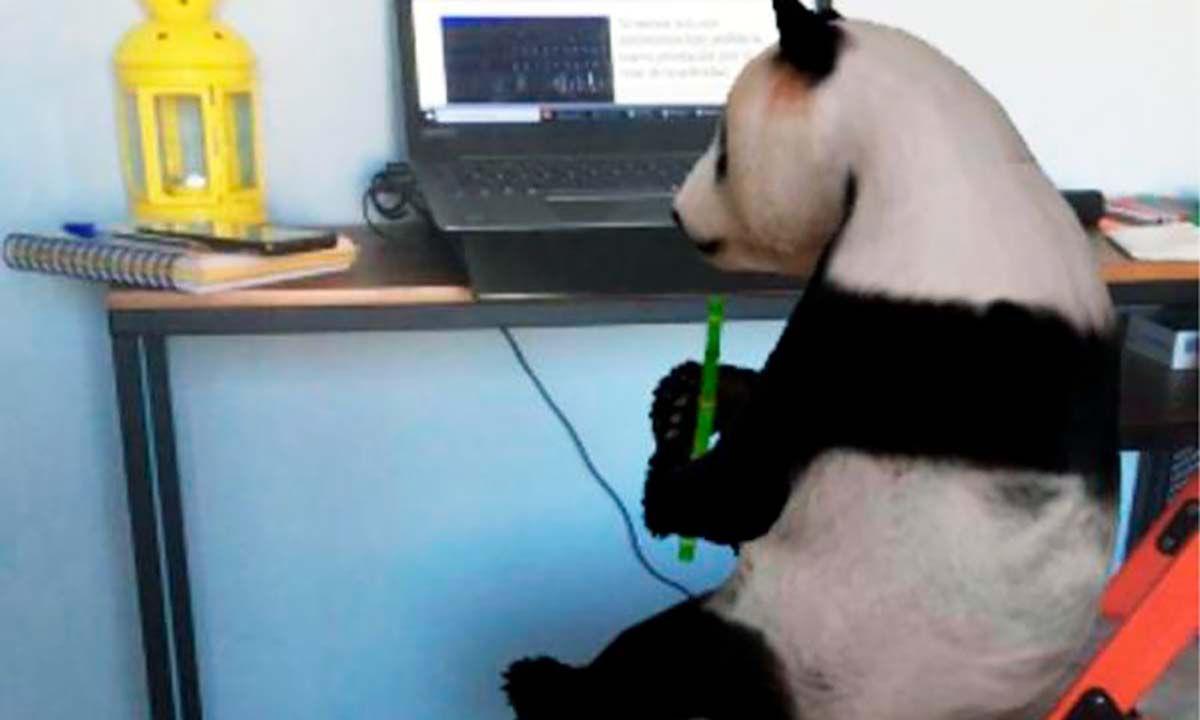 por que los animales 3d de google no funcionan en tu movil