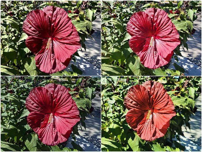 prueba de dia macro fotos iphone 11 galaxy note 10 huawei p30 pro pixel 3