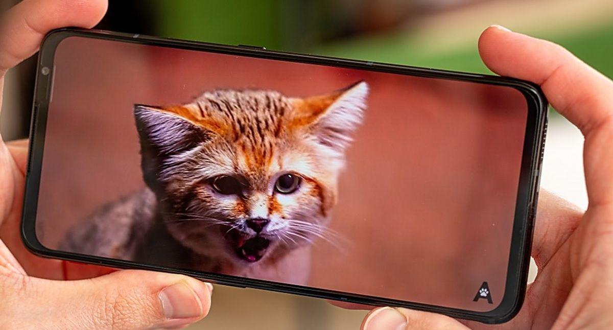 video gato en redmagic 6 pro
